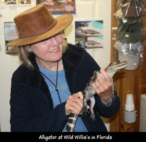 IMG_1387 Linda with alligator