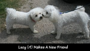 IMG_1676 Lucy makes a friend