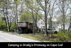 P1150413 Bear at Gradys