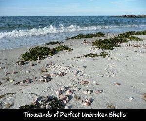 P1150446 Shells on Cape Cod