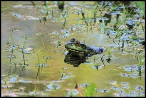 IMG_1839 frog