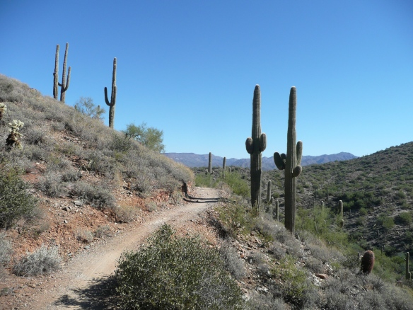 Go John Trail at Cave Creek Regional Park