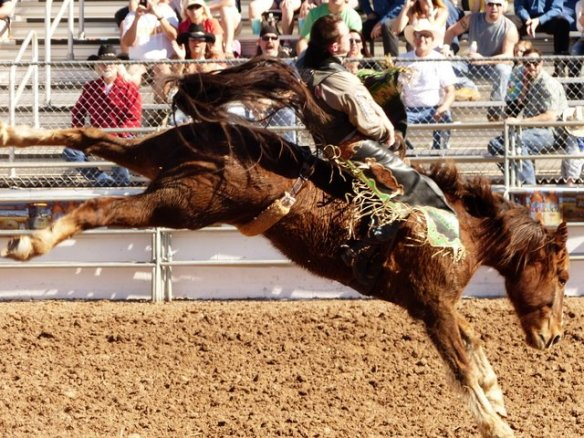 Lots of great action at the Tucson Rodeo