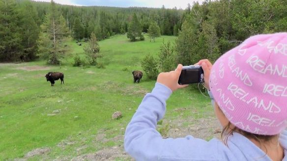 YNP5-Wildlife pic of buffalo by Kailyn