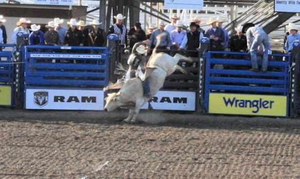 Cody Extreme Bulls!