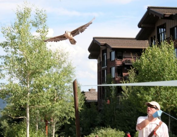 Teton Raptor Center Demonstration