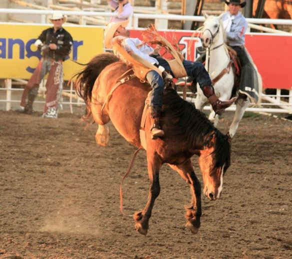 31 Cody Stampede Rodeo