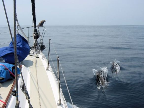 1 Sailing - dolphins in Mexico