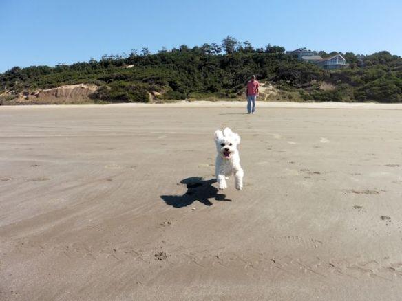 14 lucy on beach
