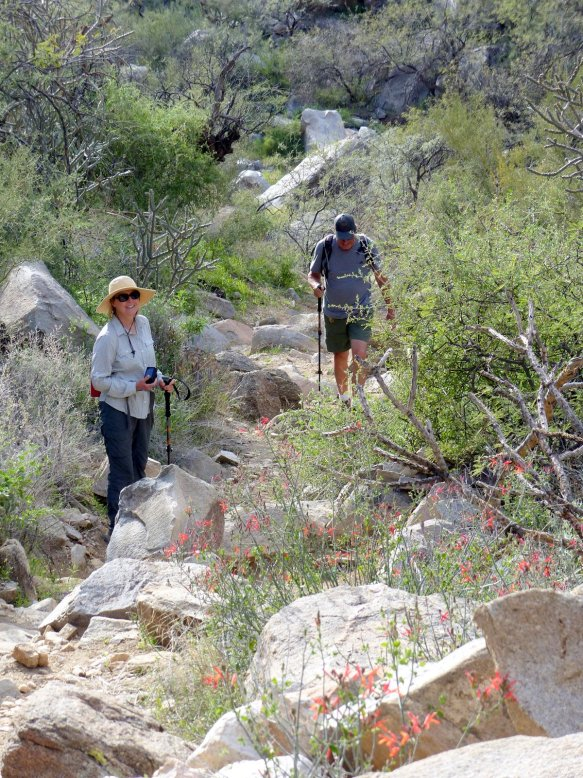 Hiking the Wild Burro Trail in Tortolita Mountain Park