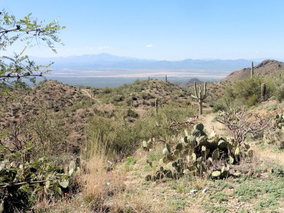 A Beautiful Hike in Tucson Mountain Park (right from our campground!)