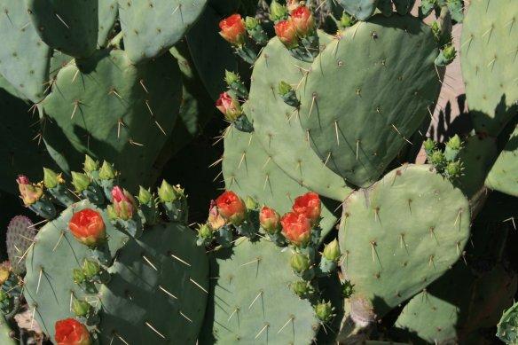 Botanic Gardens, Phoenix AZ -  04