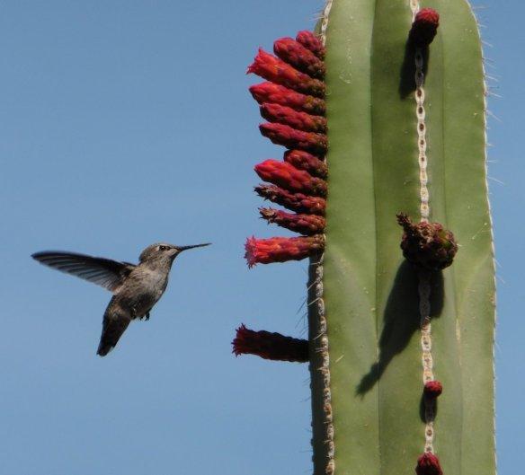 Botanic Gardens, Phoenix AZ -  112