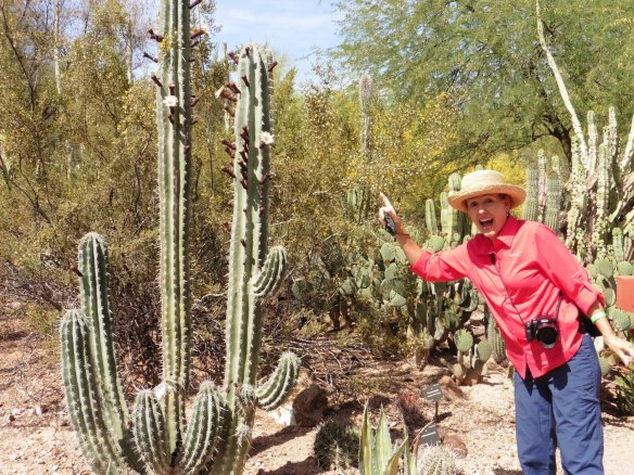 Botanic Gardens, Phoenix AZ -  169