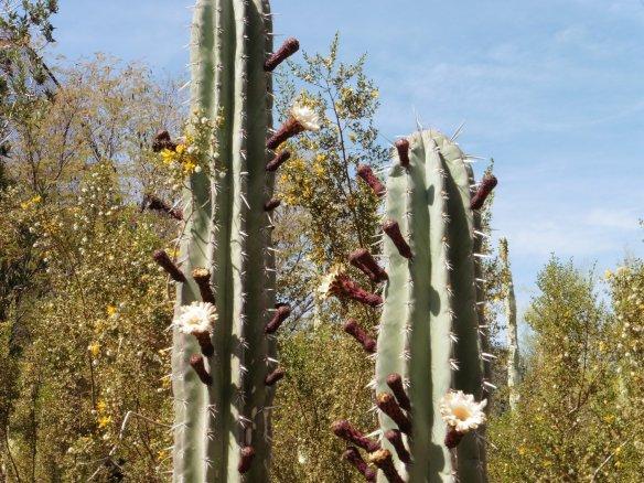 Botanic Gardens, Phoenix AZ -  171