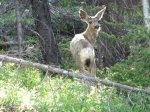 12a Deer