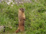 13 marmot 3
