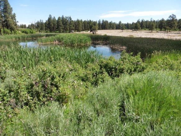 9-Mile Boggy Draw Trail, Dolores, Colorado