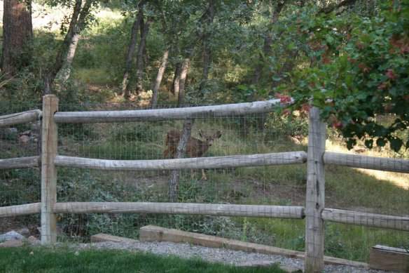 We get lots of little curious friends on our property.
